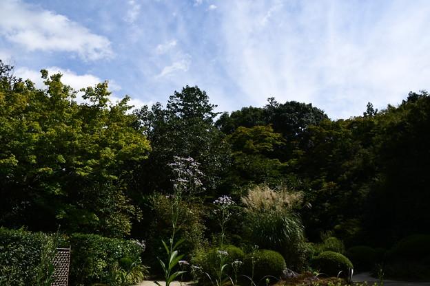 Photos: 紫苑と薄の詩仙堂