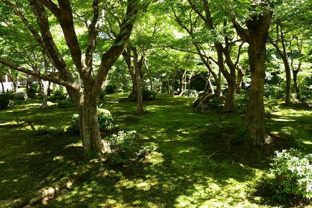 まだ緑の十牛の庭