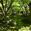Photos: まだ緑の十牛の庭