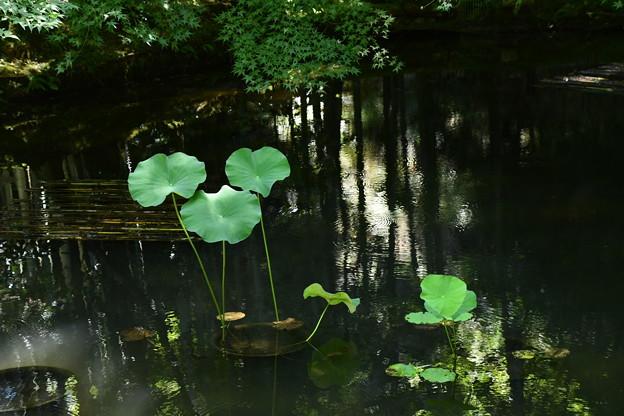 初秋の水面