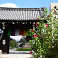 Photos: 芙蓉咲く妙蓮寺
