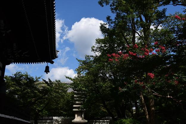 百日紅咲く妙顕寺
