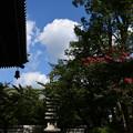 Photos: 百日紅咲く妙顕寺