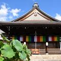 Photos: 妙蓮寺本堂
