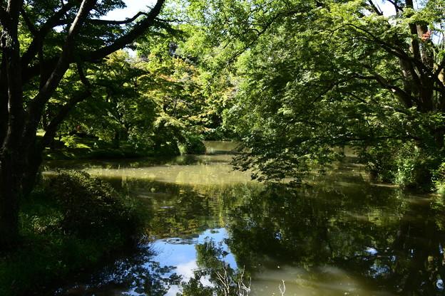 池周辺も少し色づいて~
