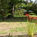 Photos: 彼岸花咲く風景