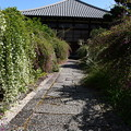 Photos: 常林寺の萩