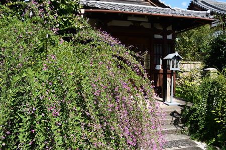 地蔵堂前の萩