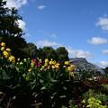 Photos: 秋空の府立植物園