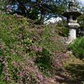 Photos: 門前の萩