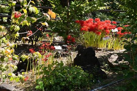 赤い花と赤い実と