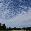 Photos: 秋の雲広がる賀茂川