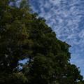 Photos: 植物園の秋空