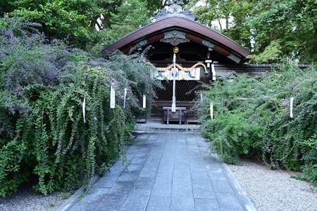 本殿前の萩