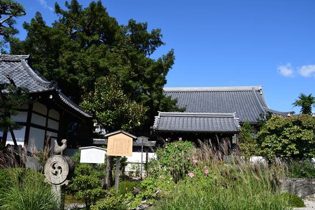 薄と芙蓉の天寧寺