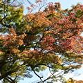Photos: 松ヶ崎疎水の紅葉