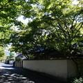 Photos: まだ緑の松ヶ崎疎水