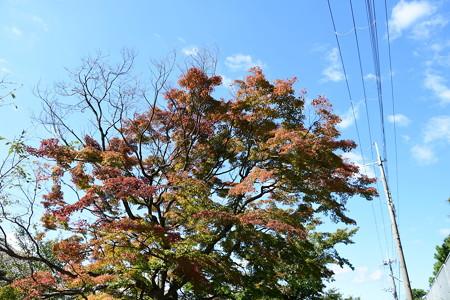浄水場脇の紅葉