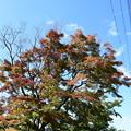 Photos: 浄水場脇の紅葉