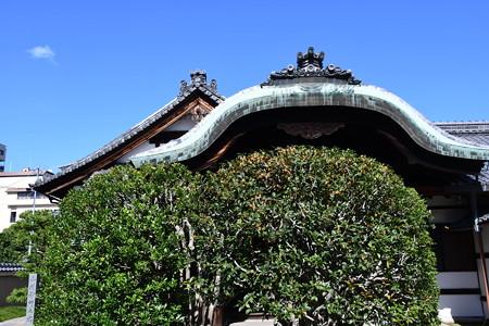 宝鏡寺の金木犀(キンモクセイ)