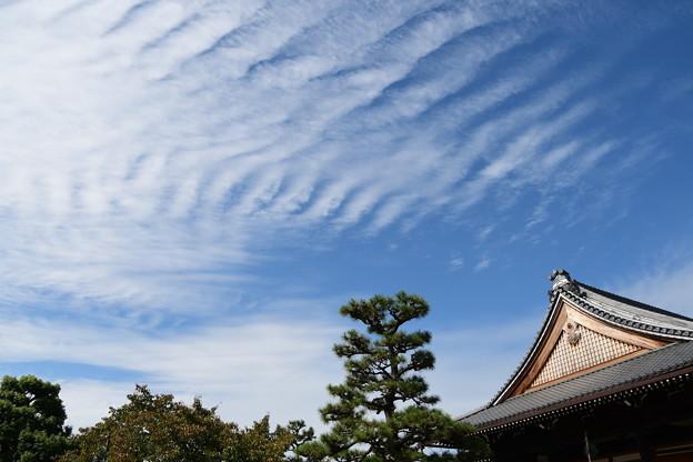 妙蓮寺の秋空