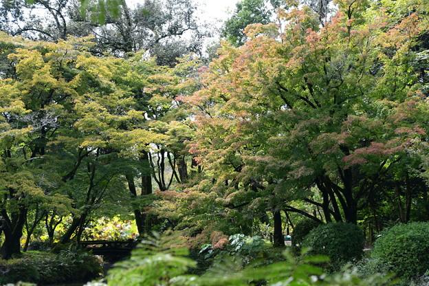 色づき始めた植物園