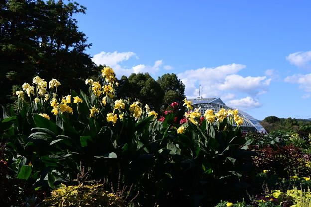 青空の府立植物園