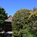 天寧寺の金木犀(キンモクセイ)