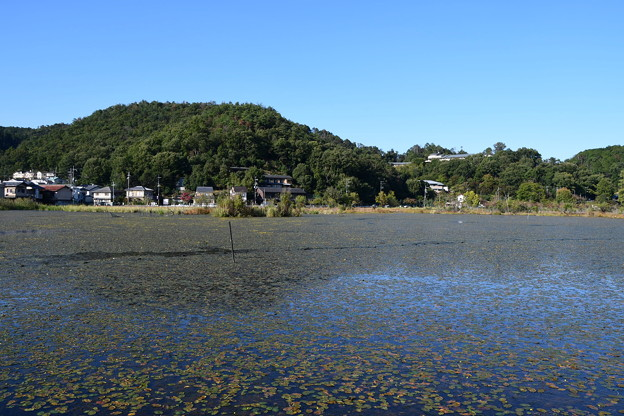 秋空の深泥池