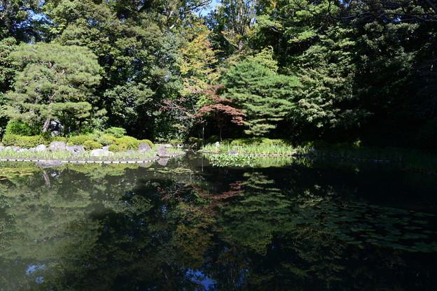 秋の白虎池