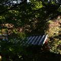 Photos: 色づき始めた青蓮院