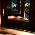 Photos: 秋の光