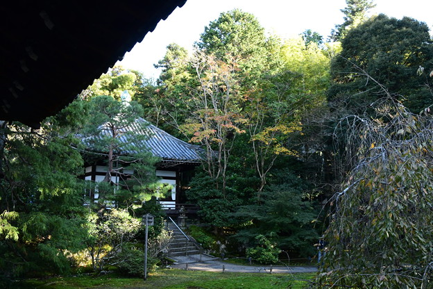 秋の青蓮院
