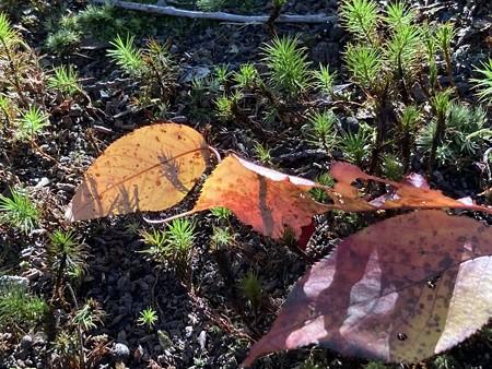 秋の日射しを浴びて