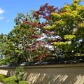 Photos: 色づき始めた芳春院