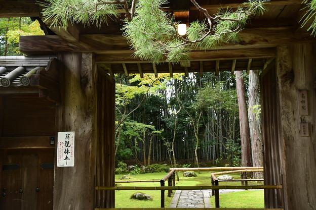 Photos: 高桐院