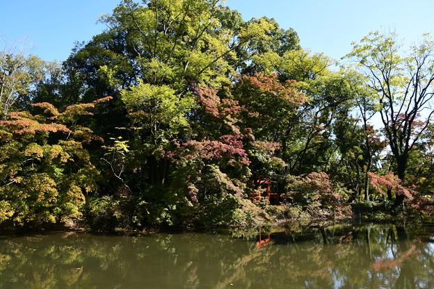 色づく池脇