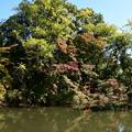 Photos: 色づく池脇