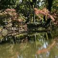 Photos: 色づき進む植物園