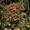 Photos: 蓮池の紅葉