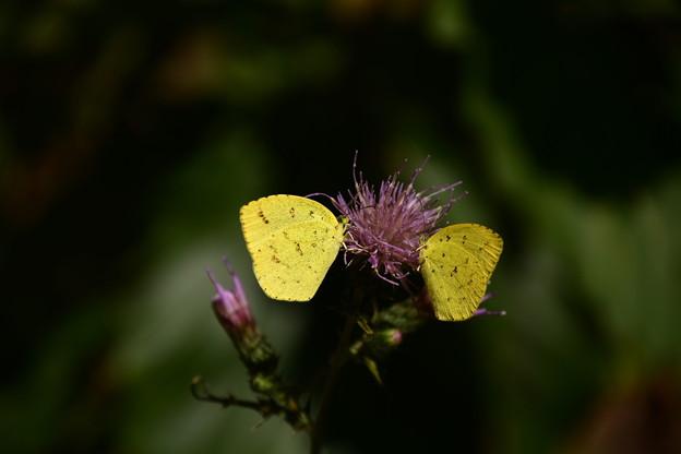 黄色の花飾り