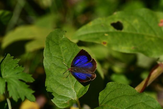 秋のブルー