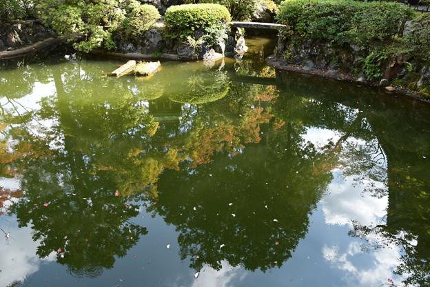 池に映る~