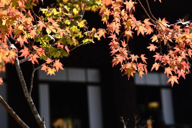 真如堂の紅葉景色
