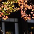 Photos: 真如堂の紅葉景色