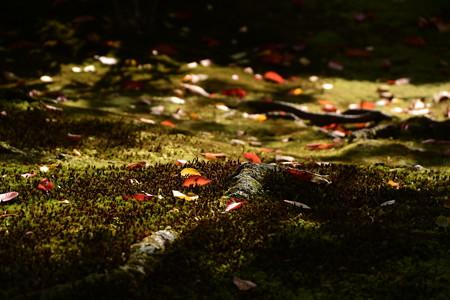 秋の日射しに