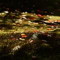 Photos: 秋の日射しに