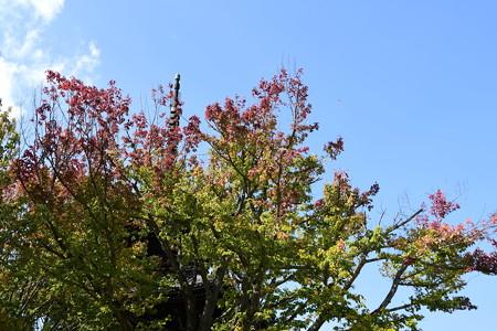 色づき始めた花の木