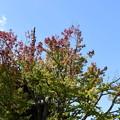 Photos: 色づき始めた花の木