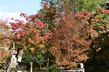 もみじと夏椿の紅葉
